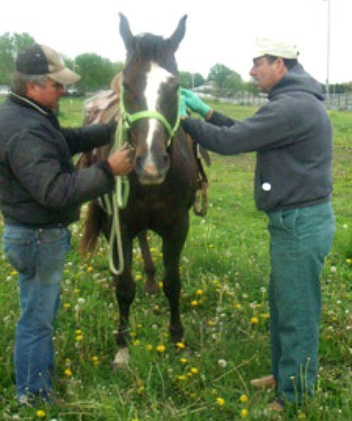 jim-horse