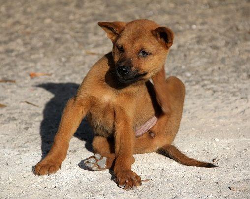 dog-1559746_640